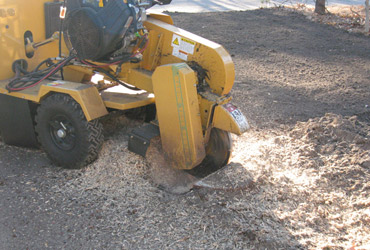 Stump grinding included for all tree work. Stump excavation is available for large trees